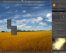 golden fields :: dpcdpc11